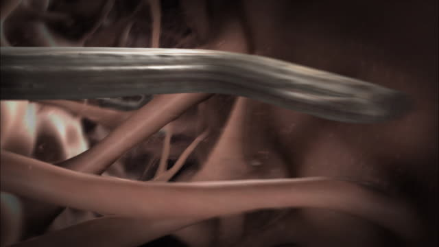 parasitic worms attack a brain and an eye in a computer-generated animation. - eyesight stock videos & royalty-free footage