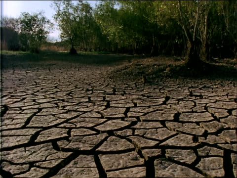parched dirt surrounds trees. - cracked stock videos & royalty-free footage