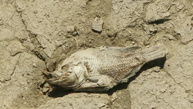 parched earth dead fish - 死んでいる動物点の映像素材/bロール