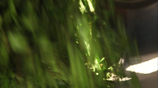 parching green tea leaves - dried tea leaves stock videos & royalty-free footage