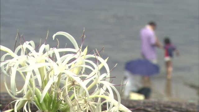 vídeos y material grabado en eventos de stock de parent and child playing in the water with the flowers in between   ms - hymenocallis caribaea