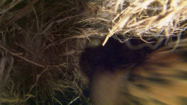 parent sparrow caring for eggs - medium group of objects stock videos & royalty-free footage