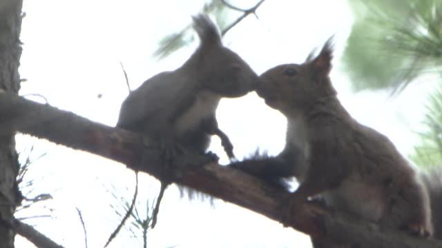 Parent-children Squirrels On Tree