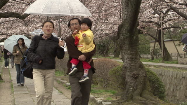 MS Parents with toddler walking on sidewalk in rainy day, cherry blossoms in background, Kyoto, Japan