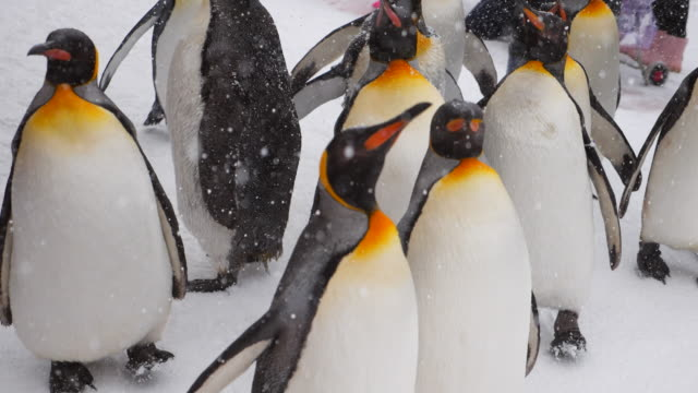 pariade penguin - antarctica stock videos & royalty-free footage