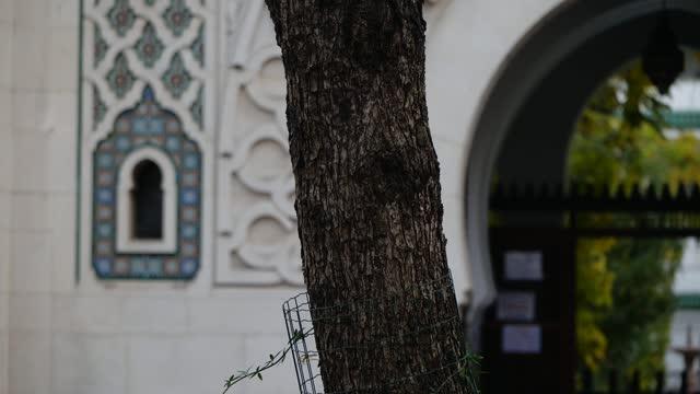 vidéos et rushes de paris and grand mosque of paris gvs; france: paris: ext various shots of paris, including close shots of the july column and surrounding metro area... - mosquée