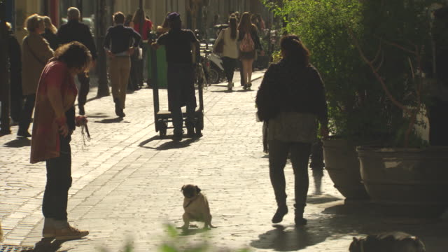 paris busy pedestrian cobbled stone lane way two dogs off leashes walk around in circles and find a spot to poop on the cobble stones dog pooping on... - defecating stock videos and b-roll footage