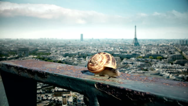 paris cityscape and eiffel tower behind the snail - snail stock videos & royalty-free footage