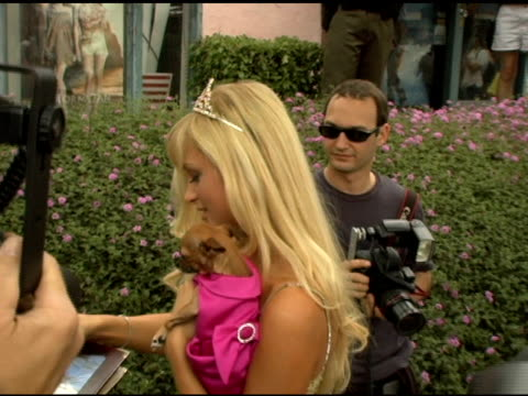 paris hilton and tinkerbell at the 35th annual glbt pride festival on june 12, 2005. - paris hilton stock videos & royalty-free footage