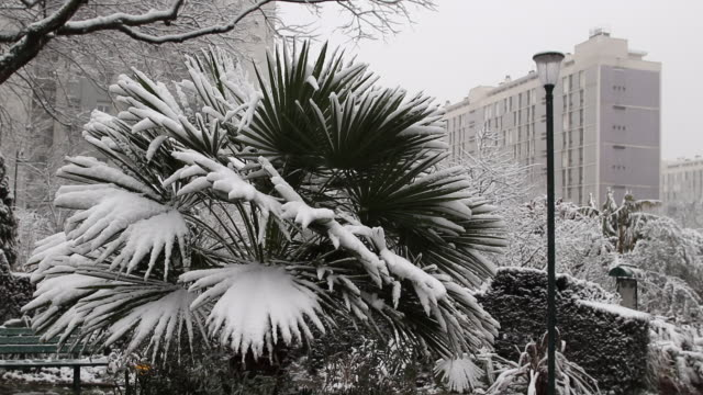 vidéos et rushes de paris with snow, 2018, vegetation couverte de neige - palmier