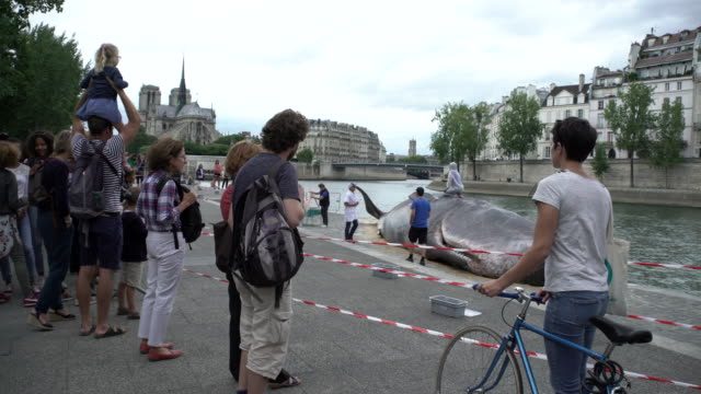 Parisian Tourist look at a whale in Paris