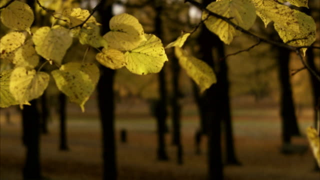 vídeos de stock, filmes e b-roll de a park a sunny autumn day stockholm sweden. - unknown gender