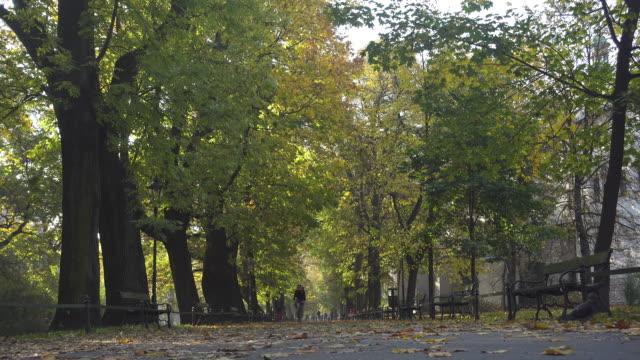 park at autumn in krakow - alberato video stock e b–roll
