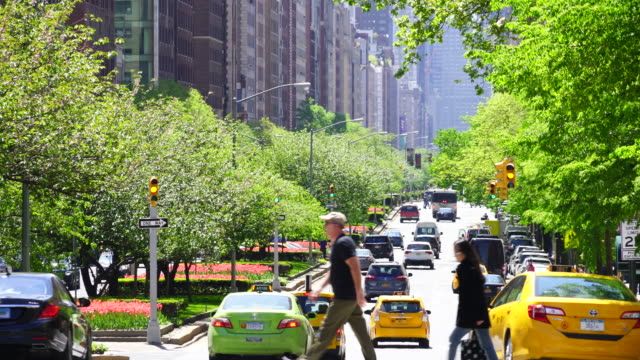 Park Avenue traffic goes through among the line of fresh green trees at Upper Manhattan New York. Rows of buildings stand along the Park Avenue.