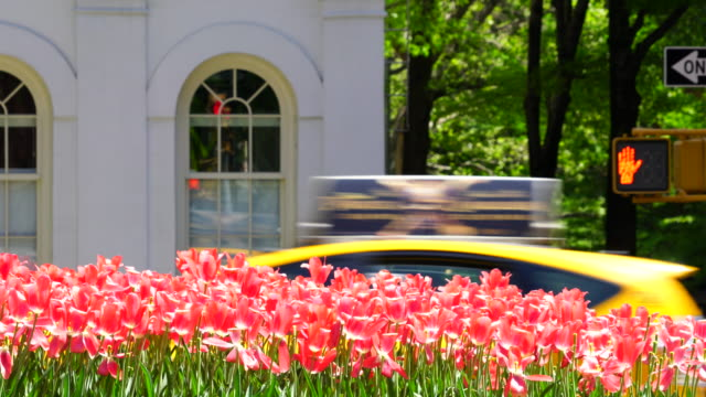 vídeos de stock, filmes e b-roll de park avenue traffic goes through between rows of tulips and architecture beside the street at upper manhattan new york. traffic signal is blinking at corner of street beside the windows of building. - sinais de cruzamento