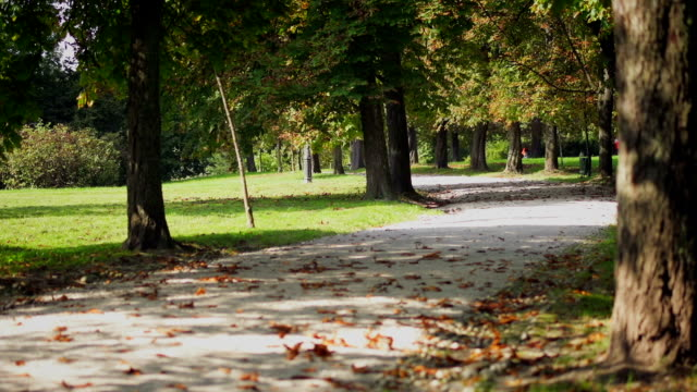 park on a sunny and warm autumn day - footpath stock videos & royalty-free footage