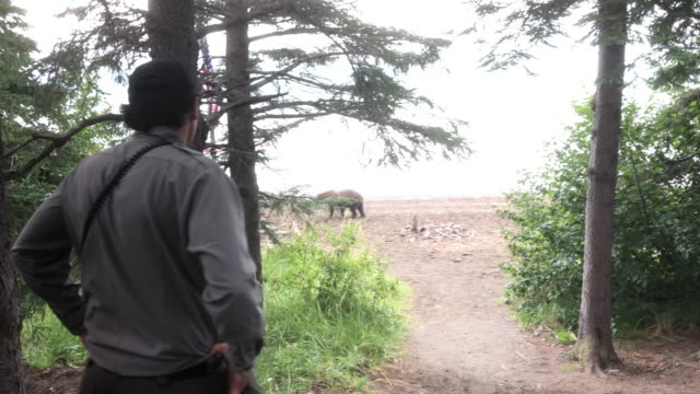 park ranger and tourists watching bears family wandering at the beach in katmai national park - 公園保安官点の映像素材/bロール