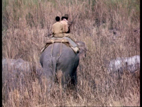 ms 3 park rangers riding elephant through long grass as greater one-horned rhinoceros scatter, india - runaway stock videos & royalty-free footage