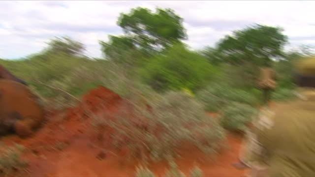 park rangers walking past dead elephants during a patrol for ivory poachers in tsavo national park in kenya - 公園保安官点の映像素材/bロール
