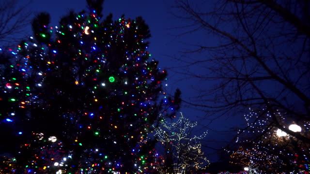 vídeos de stock e filmes b-roll de park trees covered in holiday lights, new mexico - fairy lights