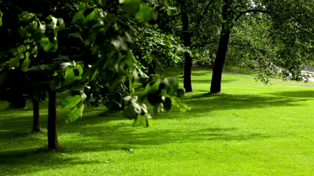 park with green lawn. - lawn stock videos & royalty-free footage