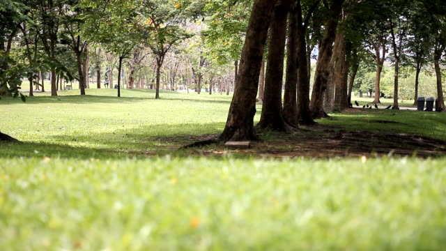 HD: Park with green lawn.