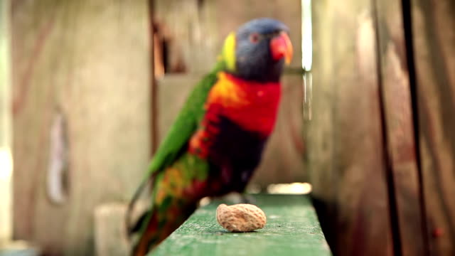 HD: Parrot And Peanut