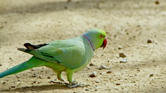 parrot bird - area selvatica video stock e b–roll