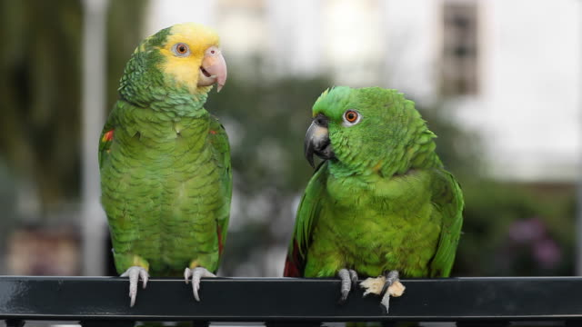 parrot diskussion - two animals stock-videos und b-roll-filmmaterial