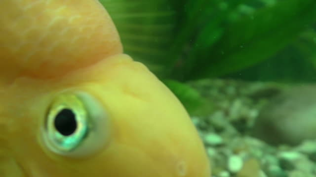 parrot fish - parrotfish stock videos & royalty-free footage