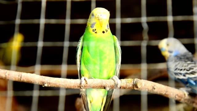vídeos de stock, filmes e b-roll de parrot em uma gaiola - lightweight