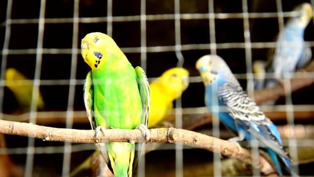 vídeos de stock e filmes b-roll de papagaio numa jaula - lightweight