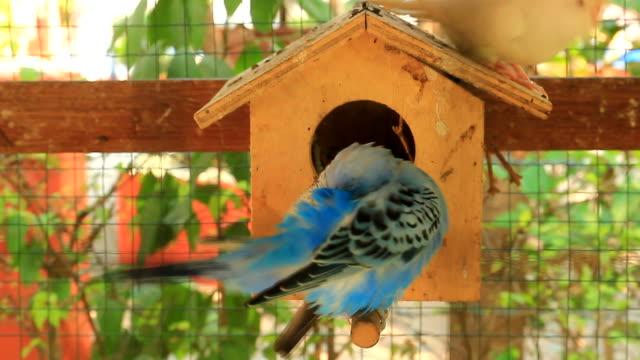 vidéos et rushes de dans une ferme de perroquet - animaux domestiques