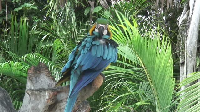 vídeos de stock e filmes b-roll de papagaio uma sombra 5-hd 60i - árvore tropical