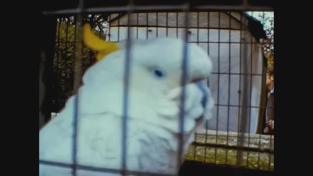 parrot in cage - animal mouth stock videos & royalty-free footage