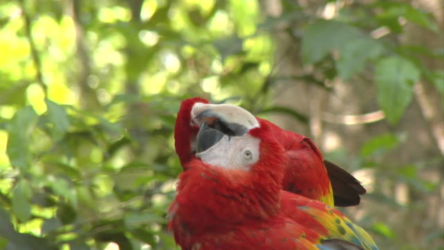 parrot in love - animal behaviour stock videos & royalty-free footage
