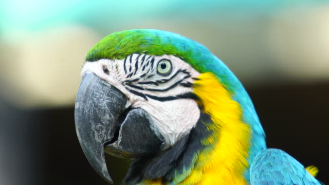 4k parrot macaw on the tree - parrot stock videos & royalty-free footage
