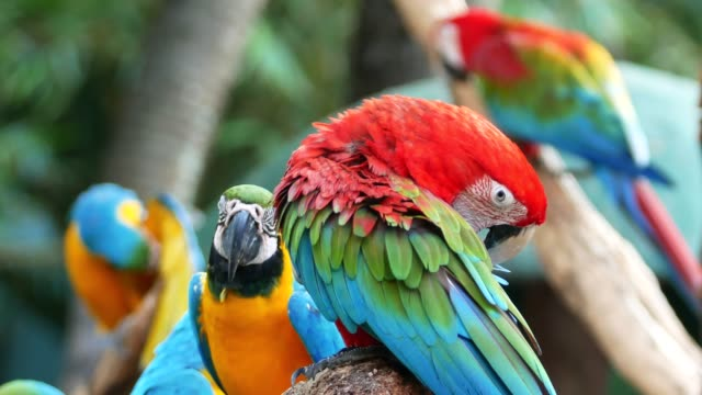 4k parrot macaw on the tree - bright colour stock videos & royalty-free footage