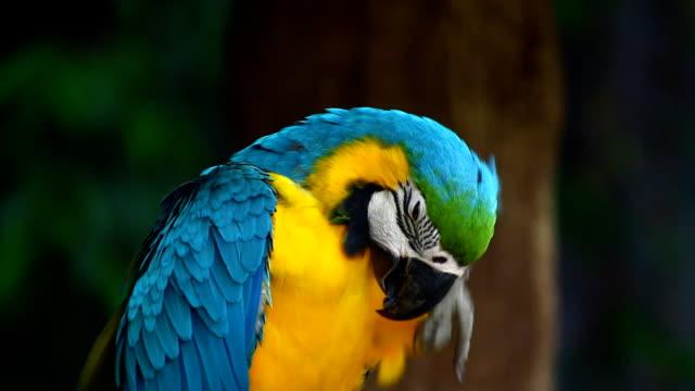 パロッツパーチ、マコー - 動物の翼点の映像素材/bロール