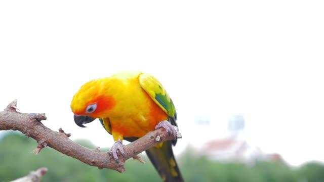 stockvideo's en b-roll-footage met parrot on the branch,slow motion - lichaamsdeel van dieren