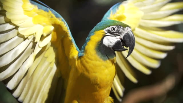 parrot spreading its wings - animal wing stock videos & royalty-free footage