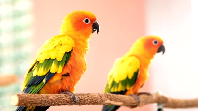 parrot - two animals stock-videos und b-roll-filmmaterial