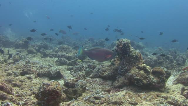 parrotfish - parrotfish stock videos & royalty-free footage