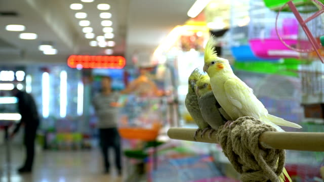 parrots in pet shop - petshop stock videos and b-roll footage