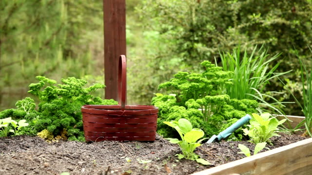 parsley, chives growing. home herb garden. vegetables. healthy living. - parsley stock videos and b-roll footage