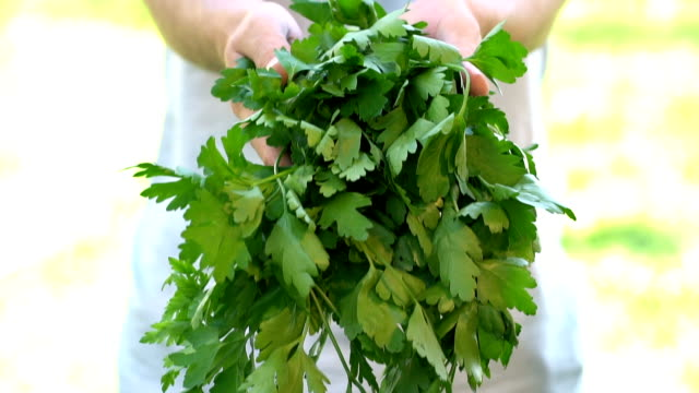 parsley harvest - slow motion - parsley stock videos and b-roll footage
