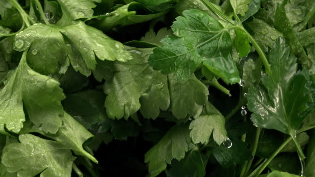 parsley in the air - herb stock videos & royalty-free footage