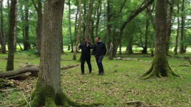 voiced shows drone shots trees growing in new forest area in south of england in the uk and exterior shots volunteers working in national forest... - new forest stock videos and b-roll footage