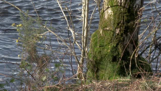 Part of a tree next to a river covered in moss
