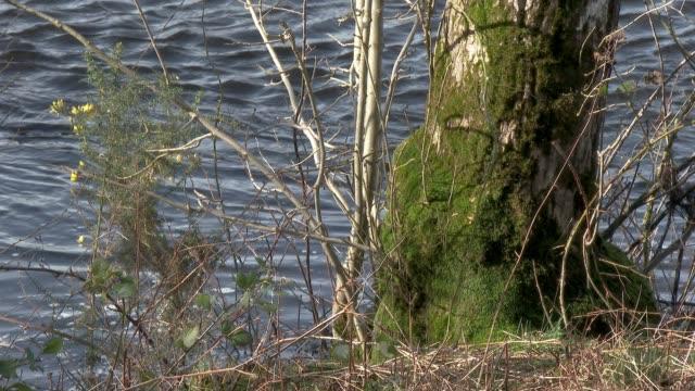 Teil eines Baumes neben einem mit Moos bedeckten Fluss